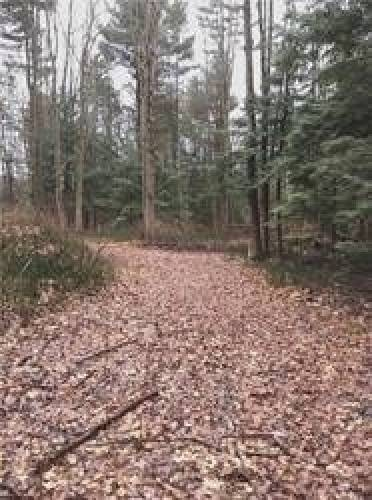 0 Blyth Park Rd- Cramahe- Ontario K0K1S0, ,Vacant Land,Sale,Blyth Park,X4766749